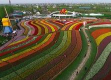 Jiangsu yancheng: de luchtfotografie van 30 miljoen tulpen in Nederland bedwelmt Stock Afbeeldingen