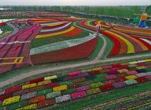 Jiangsu yancheng: de luchtfotografie van 30 miljoen tulpen in Nederland bedwelmt Royalty-vrije Stock Afbeeldingen