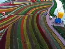 Jiangsu yancheng: de luchtfotografie van 30 miljoen tulpen in Nederland bedwelmt Stock Afbeelding