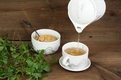 Jiaogulan чай Стоковое фото RF