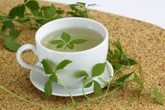 Jiaogulan tea  /Gynostemma pentphyllum/ Stock Photography