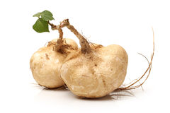 Jicama Royalty Free Stock Photography