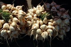 Jicama, kernachtig vers en zoet smaakfruit in markt Stock Afbeeldingen