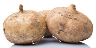 Jicama Or Mexican Yam IV Stock Image