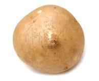 Jicama root Stock Image