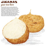 Jicamas Royalty Free Stock Photo