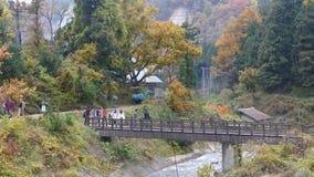 Jigokudani Monkey Park stock video footage