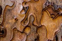 Jigsaw tree bark background. Background texture of a Ponderosa pine (Pinus ponderosa) bark Stock Images