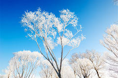 Jilin frost. The photo was taken in Wusong island Ulla manchu town Longtan district Jilin city Liaoning provence,China stock image