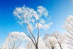 Jilin frost Stock Image