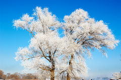 Jilin rime in blue sky. The photo was taken in Wusong island Ulla manchu town Longtan district Jilin city Liaoning provence,China royalty free stock images