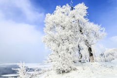 Jilin Rime Stock Photos