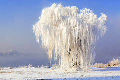Jilin Rime Royalty Free Stock Photos