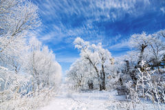 Jilin Rime Royalty Free Stock Image