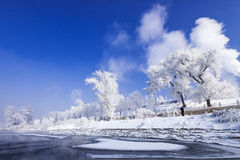 Jilin Rime Royalty Free Stock Images