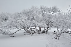 Jilin rime and snow Stock Photography