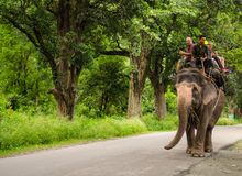 Jim corbett royalty free stock image