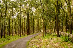 jim corbett stock photography
