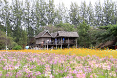 Jim Thompson Farm Thailand Royaltyfri Fotografi