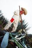 Jimador mężczyzna agawa Obrazy Stock