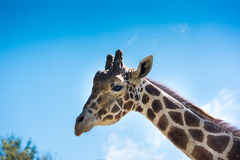 Jimmi with Blue Sky and Clouds Stock Images