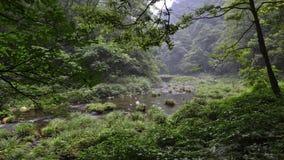Jinbianxi,金黄鞭子小河 图库摄影