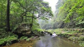 Jinbianxi,金黄鞭子小河 库存照片