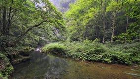 Jinbianxi den guld- Whip Stream Arkivbild