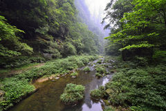 Jinbianxi, the Golden Whip Stream. Jinbianxi is one of the most beautiful valleys in the world.It is about 7.5km long and 30-50m wide.Jinbianxi is like a blue Royalty Free Stock Image