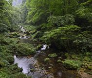 Jinbianxi, the Golden Whip Stream. Jinbianxi is one of the most beautiful valleys in the world.It is about 7.5km long and 30-50m wide.Jinbianxi is like a blue Stock Photography