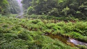Jinbianxi, goldene Whip Stream Stockfotos