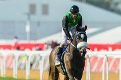 Jinete Action de la carrera de caballos Fotos de archivo