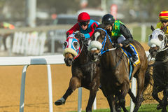 Jinete Action de la carrera de caballos Foto de archivo libre de regalías