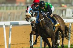 Jinete Action de la carrera de caballos Foto de archivo
