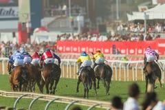 Jinete Action de la carrera de caballos Fotografía de archivo
