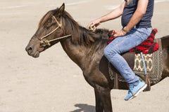 Jinete asentado en parte trasera de un pequeño caballo que sostiene el lazo por el righ Imagen de archivo libre de regalías