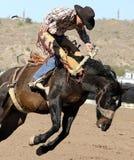 Jinete Bucking del Bronc del rodeo Fotografía de archivo