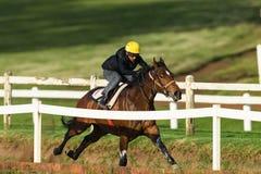 Jinete Closeup Running Track del caballo de raza Imagenes de archivo