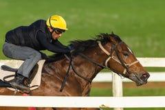 Jinete Closeup Running Track del caballo de raza Imágenes de archivo libres de regalías