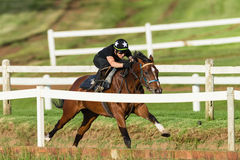 Jinete Closeup Running Track del caballo de raza Fotos de archivo libres de regalías