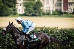 Jinete con la chaqueta azul en una carrera de caballos Imagen de archivo