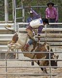 Jinete de Bull Fotos de archivo