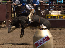 Jinete de Bull del rodeo Foto de archivo libre de regalías