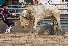 Jinete de Bull en la suciedad Imagen de archivo libre de regalías