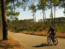 Jinete de la bici de montaña en el camino forestal Imágenes de archivo libres de regalías