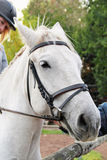 Jinete de la muchacha en un caballo Foto de archivo