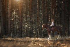 Jinete de la mujer joven con su caballo en la igualación de la luz de la puesta del sol en el bosque foto de archivo