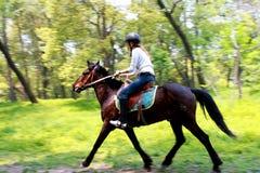 Jinete del caballo Imagen de archivo libre de regalías
