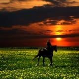 Jinete del caballo Fotografía de archivo