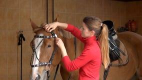 Jinete del caballo que prepara el freno en el establo imagen de archivo
